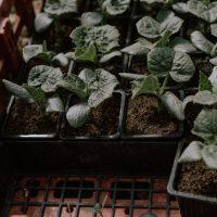 cyrille-morineaux-les-resistants-16
