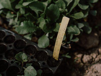 cyrille-morineaux-les-resistants-18