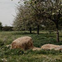 cyrille-morineaux-les-resistants-35