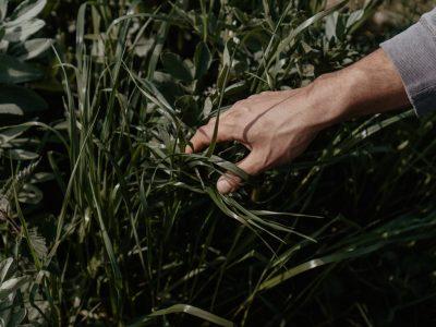 cyrille-morineaux-les-resistants-5